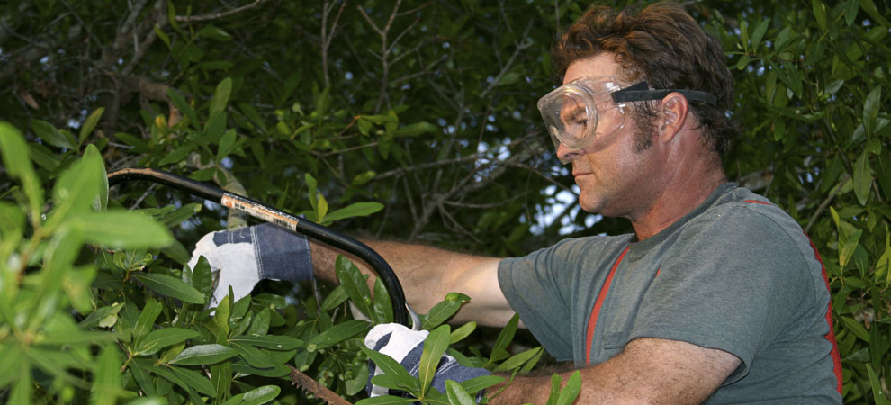 About A And C Tree Services