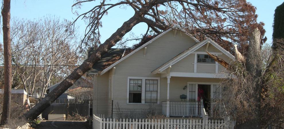 Omaha Emergency Tree Removal
