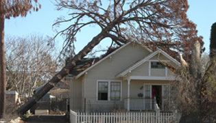 Omaha Emergency Tree Removal