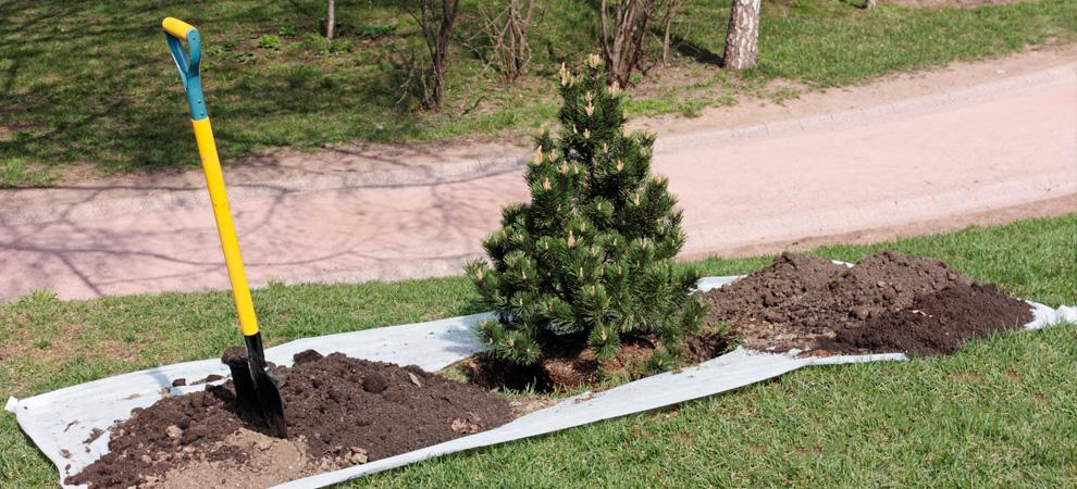 Bellevue/ Papillion/ La-Vista Tree Planting
