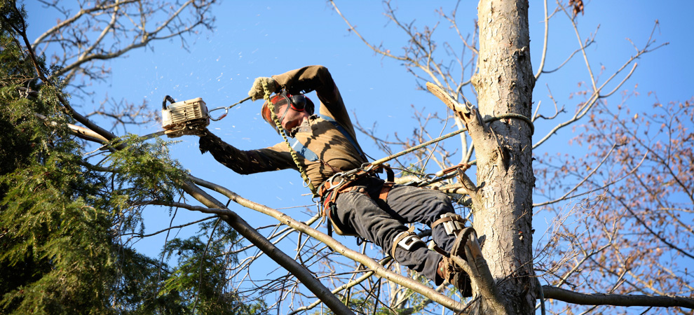 Omaha Tree Pruning