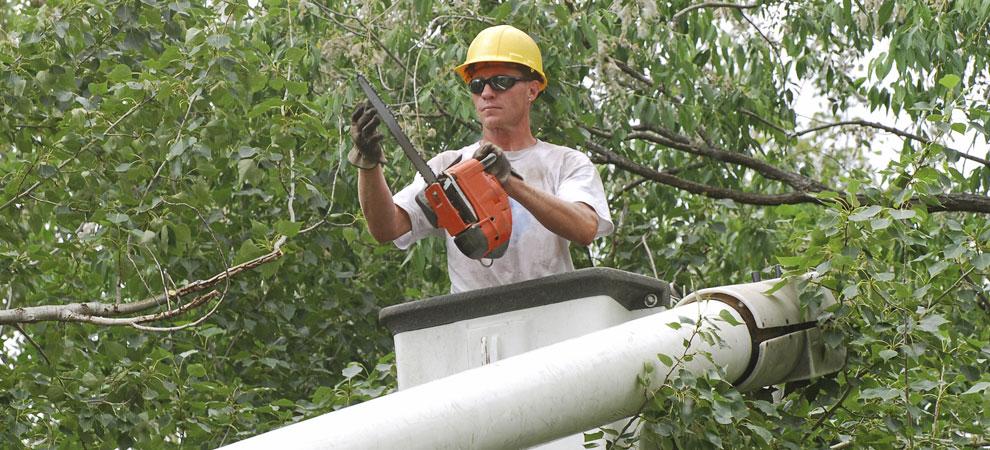 Bellevue/ Papillion/ La-Vista Tree Service