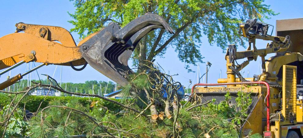 Bellevue/ Papillion/ La-Vista Tree Trimming & Removal